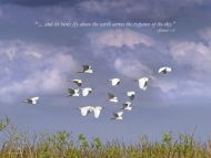 Snowy Egrets with Creation Quote